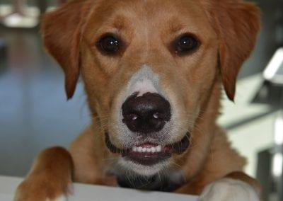 Happy dog at pet camp
