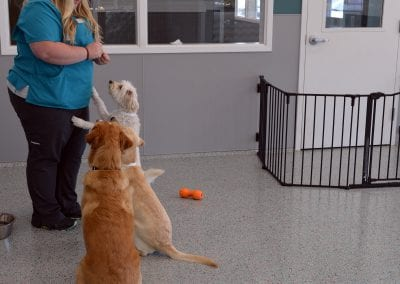 pet training in Bloomington, MN at WellHaven Pet Health