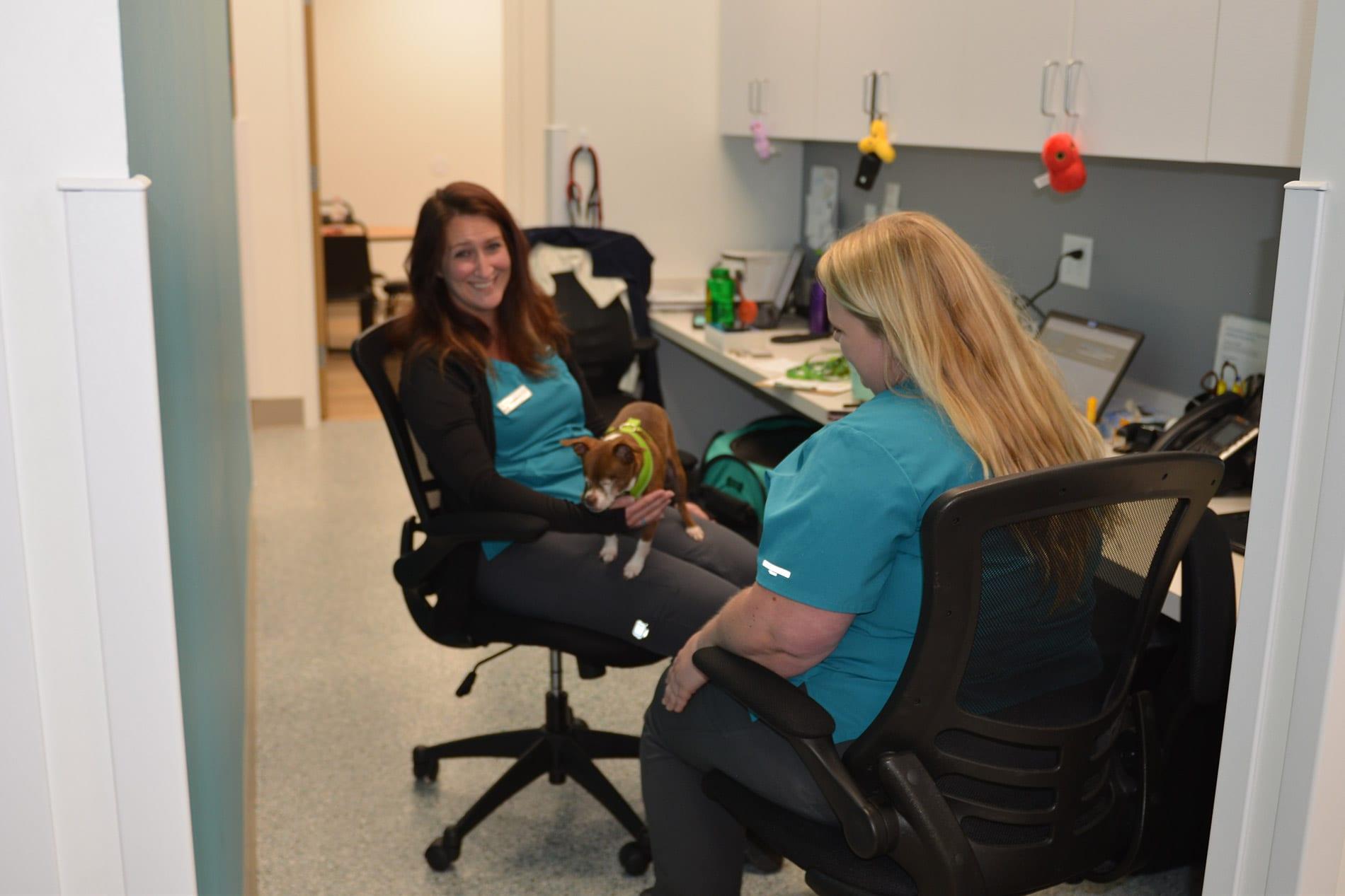 Bloomington, MN veterinarian services